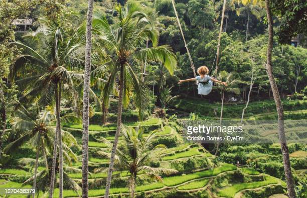 rear view of woman on a swing - bortes stock pictures, royalty-free photos & images