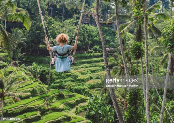 rear view of woman on swing in forest - bortes stock pictures, royalty-free photos & images