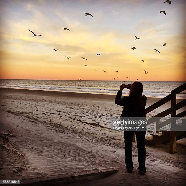 Rear View Of Woman Photographing Birds At Beach Against Sky During Sunset