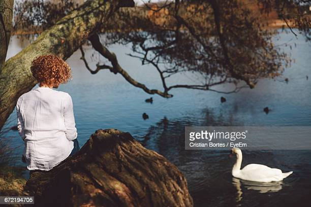 rear view of woman sitting on rock with white swan swimming in lake - bortes foto e immagini stock