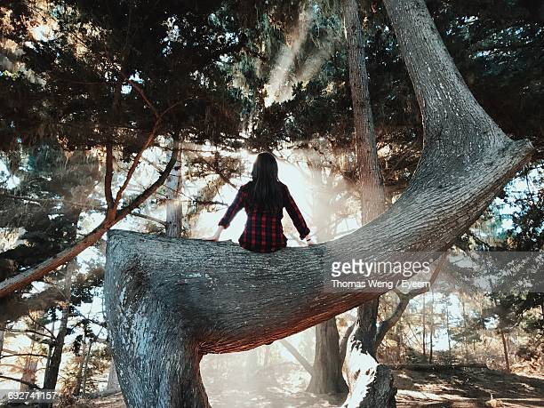 Rear View Of Woman Sitting On Tree Branch At Forest