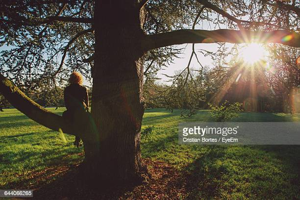 rear view of woman sitting on tree branch at park - bortes stock pictures, royalty-free photos & images
