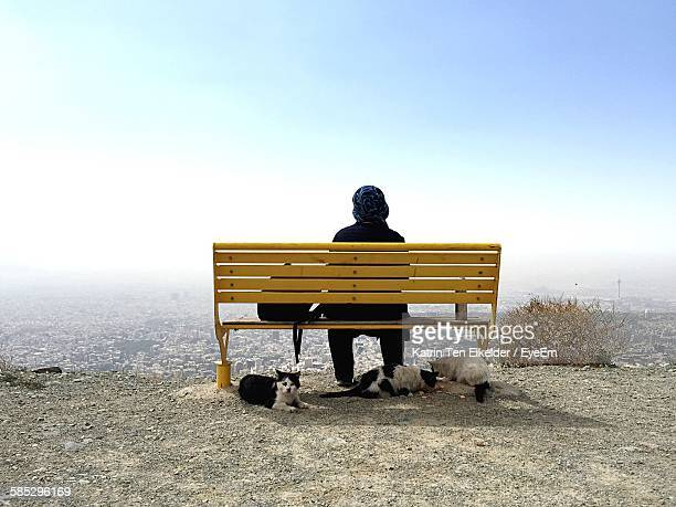 rear view of woman sitting on yellow bench with stray cats against clear sky - tehran stock pictures, royalty-free photos & images