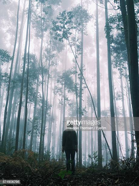 Rear View Of Woman Standing Against Trees In Forest During Foggy Weather