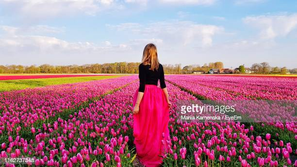 rear view of woman standing amidst pink tulips at farm - netherlands stock pictures, royalty-free photos & images