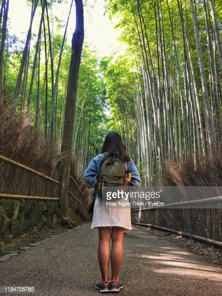rear view of woman standing in forest - ngoc trinh ストックフォトと画像