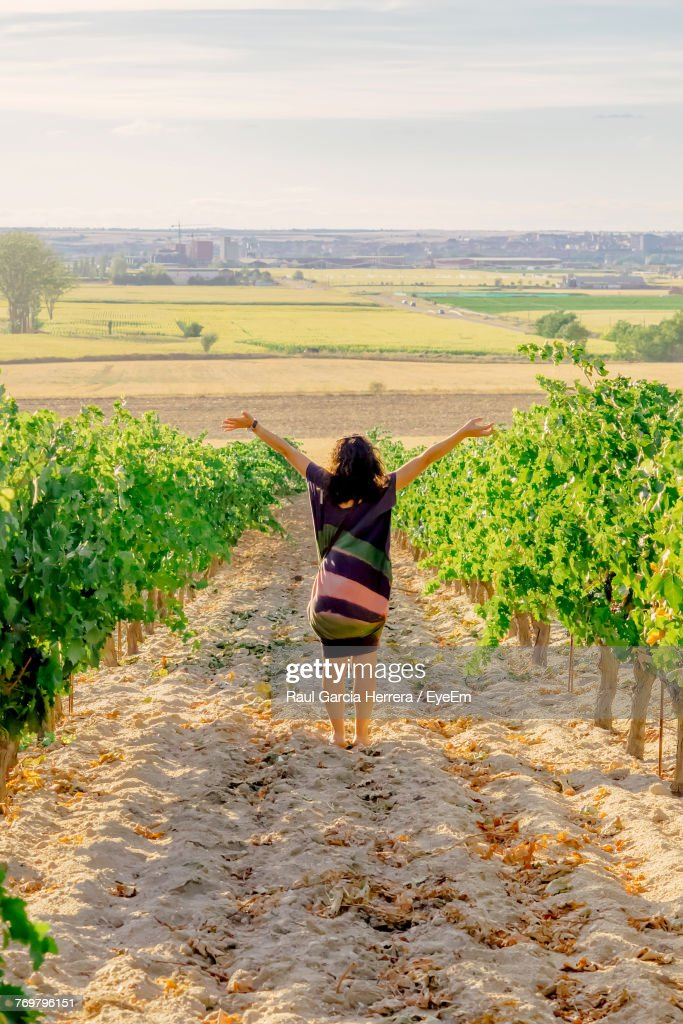 Rear View Of Woman Standing In Vineyard : Stock Photo