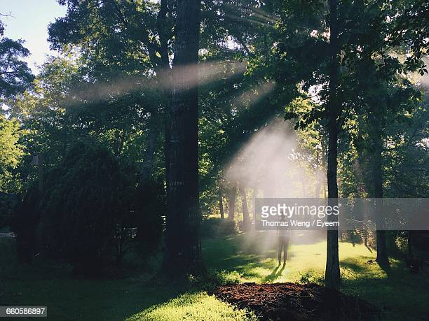 rear view of woman standing on field in forest - taken on mobile device stock photos and pictures