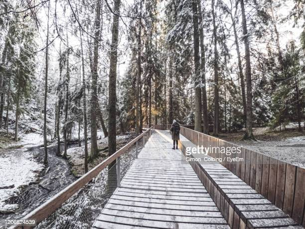 rear view of woman standing on walkway amidst trees in forest during winter - colbing stock pictures, royalty-free photos & images