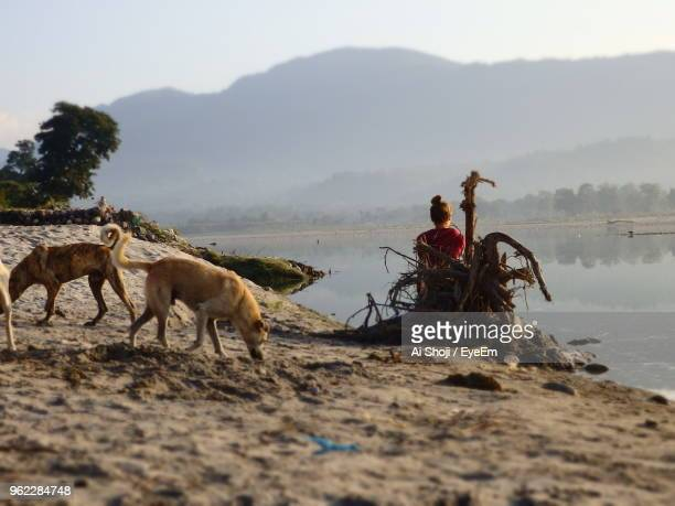 Rear View Of Woman Standing With Stray Dogs At Lakeshore