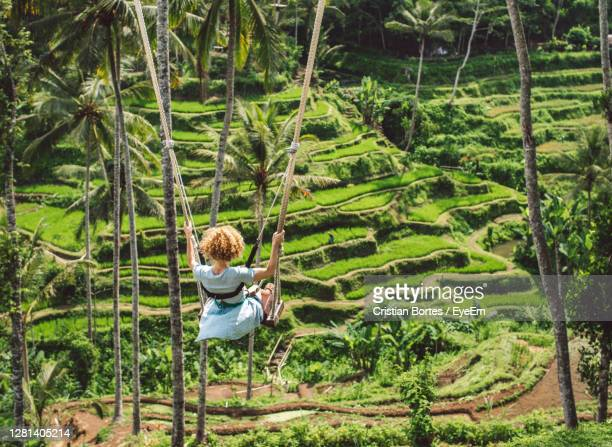 rear view of woman swinging in forest - bortes stock pictures, royalty-free photos & images