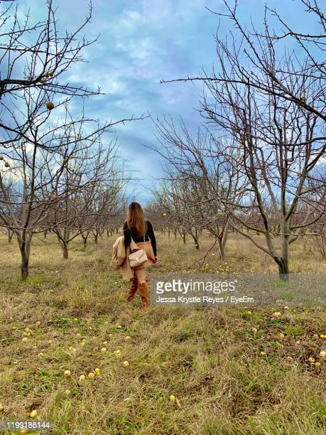 rear view of woman walking amidst bare trees - jessa stock pictures, royalty-free photos & images