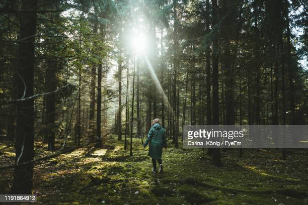 rear view of woman walking amidst trees in forest - wald stock-fotos und bilder