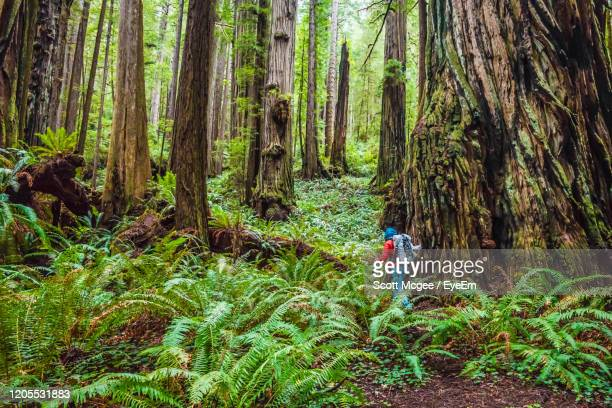 rear view of woman walking by trees at national park - california stock pictures, royalty-free photos & images
