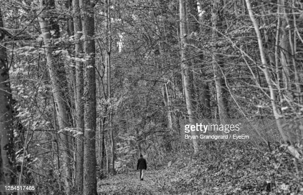 rear view of woman walking in forest during winter - mulhouse stock pictures, royalty-free photos & images