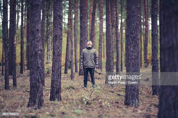 rear view of woman walking in forest - naturwald stock-fotos und bilder