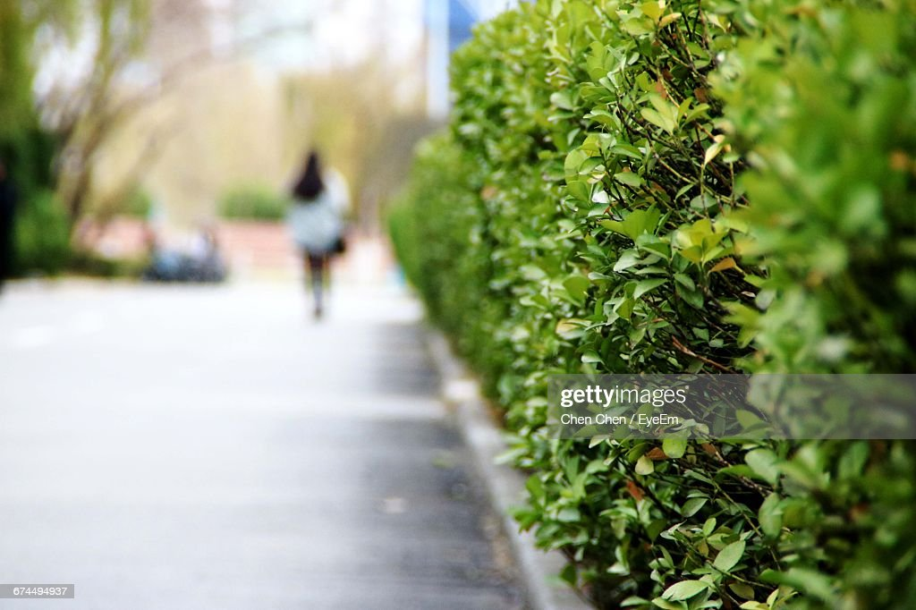 Rear View Of Woman Walking On Footpath By Plants : Stock Photo