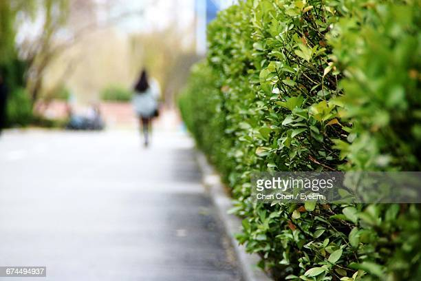 Rear View Of Woman Walking On Footpath By Plants