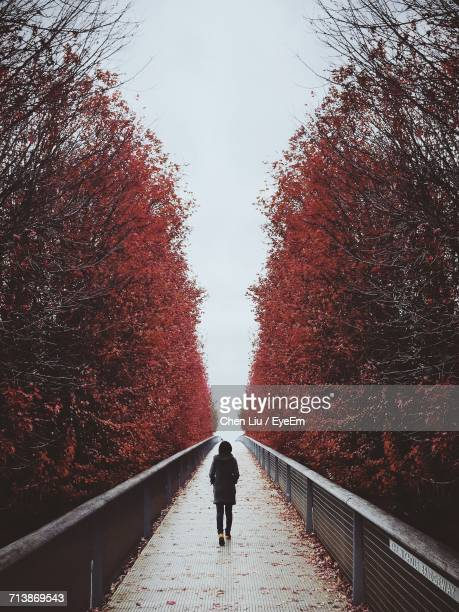 Rear View Of Woman Walking On Nichols Bridgeway Amidst Trees During Winter