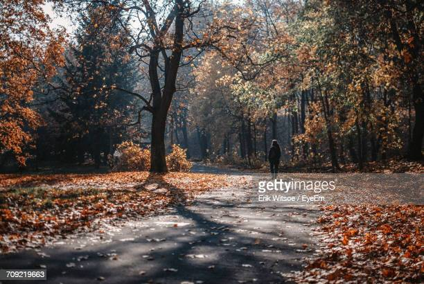 Rear View Of Woman Walking On Road Amidst Trees During Autumn