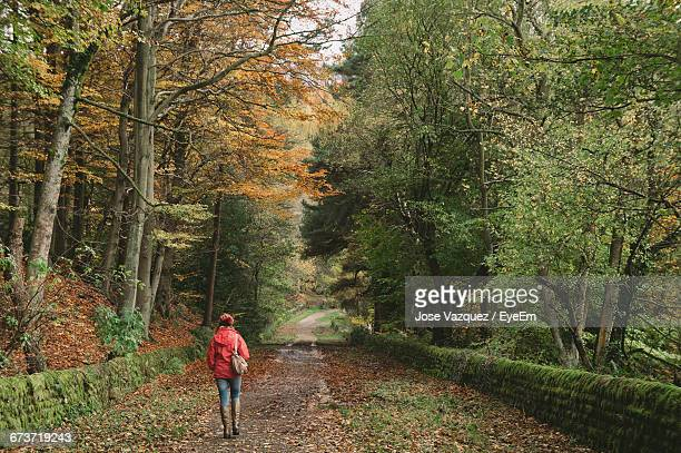 rear view of woman walking on road amidst trees in forest - sheffield stock pictures, royalty-free photos & images