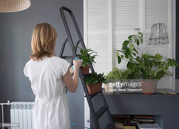 Rear view of woman watering pot plants on step ladder
