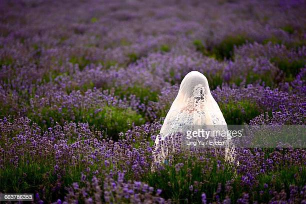 rear view of woman wearing dupatta while standing amidst purple flowers blooming on field - dupatta stock pictures, royalty-free photos & images
