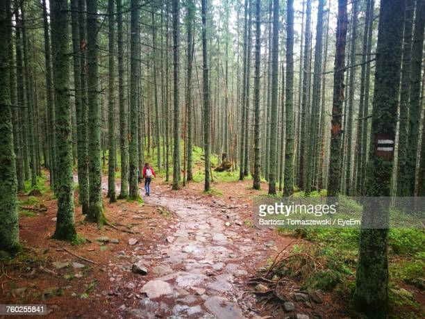 Rear View Of Woman With Backpack Walking In Forest