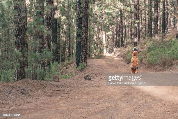rear view of woman with dog on road in forest - t rex stock-fotos und bilder