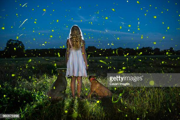 rear view of woman with dogs standing on field at dusk - 蛍 ストックフォトと画像
