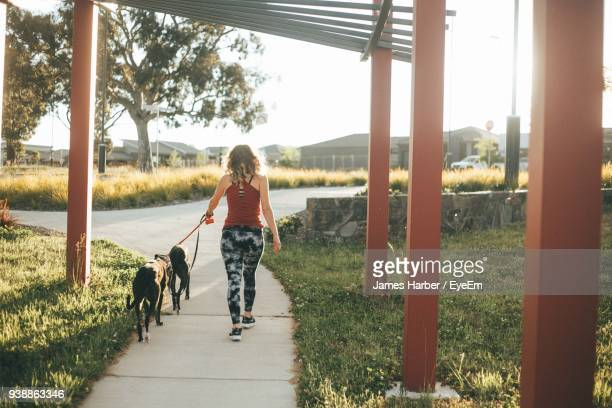 Rear View Of Woman With Dogs Walking At Park