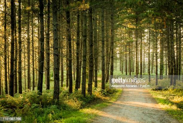 rear view of woman with son walking on road amidst trees in forest - alejandro ascanio fotografías e imágenes de stock