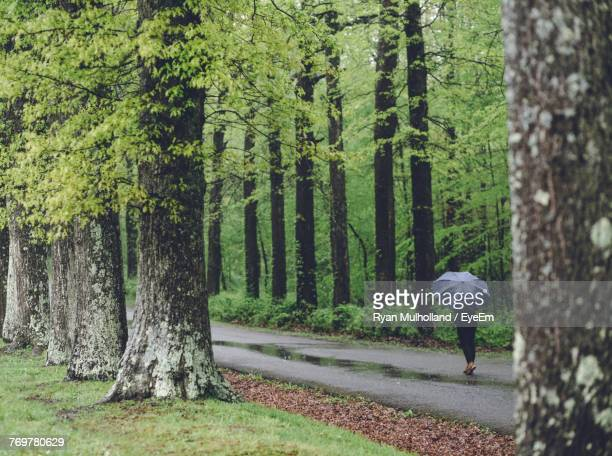 Rear View Of Woman With Umbrella Walking In Forest