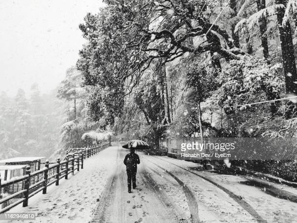 rear view of woman with umbrella walking on snow covered road - shimla stock pictures, royalty-free photos & images