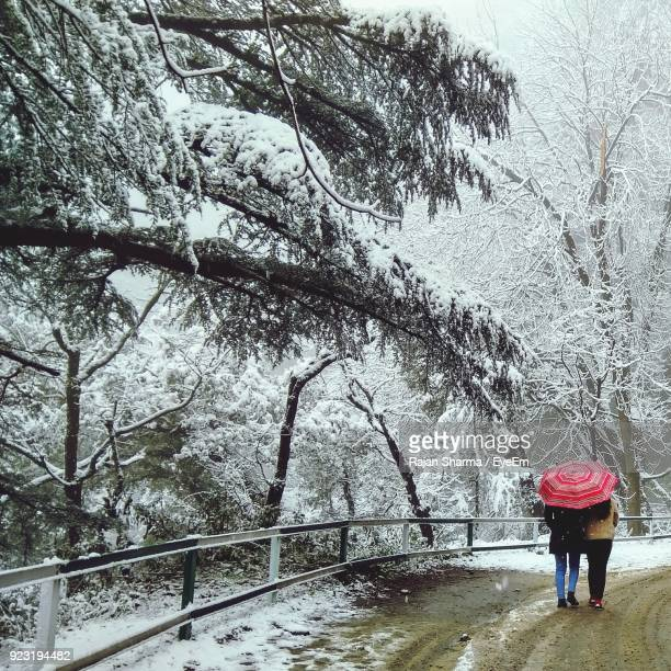 rear view of women walking on road with umbrella during snowfall - shimla stock pictures, royalty-free photos & images