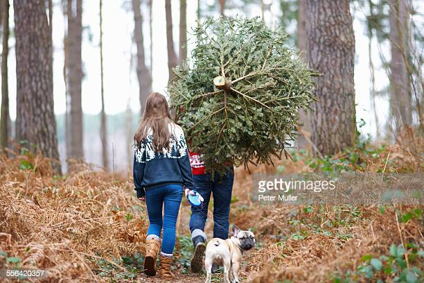 Rear view of young couple carrying Christmas tree on shoulders in woods