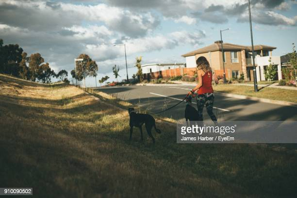 rear view of young woman with dogs walking on footpath - canberra stock pictures, royalty-free photos & images