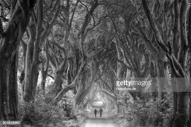 Rear view on couple holding hands walking through foggy dark hedges in Northern Ireland