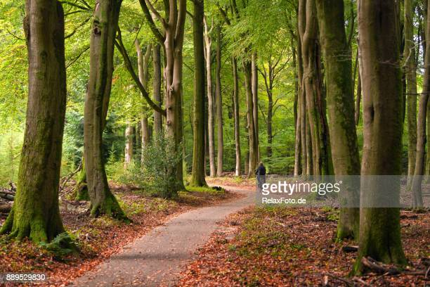 rear view on cycling senior man on treelined footpath through beech forest - gelderland stock pictures, royalty-free photos & images