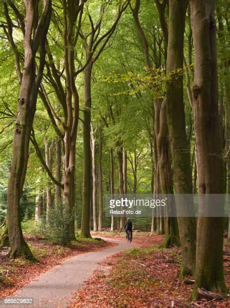 Rückansicht auf Radfahren senior woman auf Bäumen gesäumt Fußweg durch Buchenwald