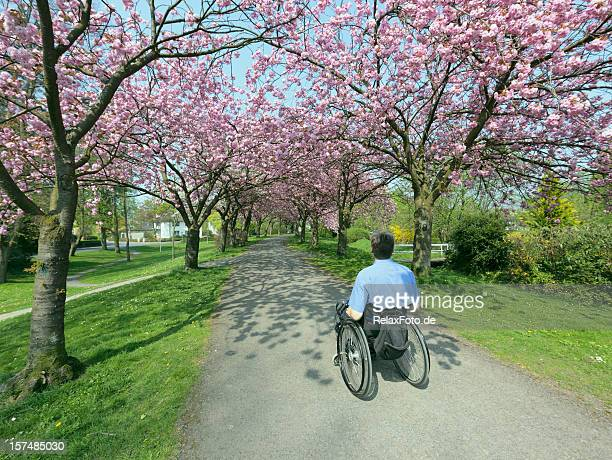 Rear view on man in wheelchair under blooming cherry trees