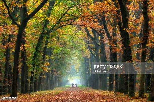 Rear view on Senior couple cycling on treelined path through majestic autumn leaf colors of beech trees