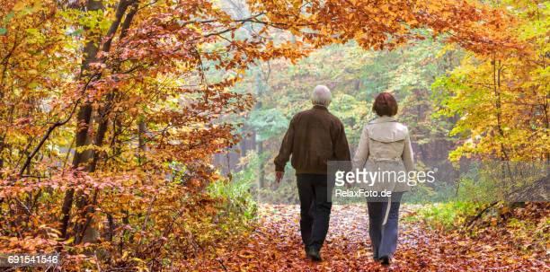 Rückansicht auf älteres Paar im Herbst unter Baumkronen im Wald wandern
