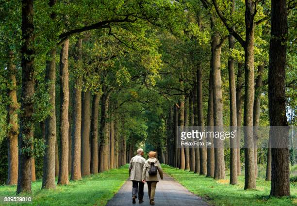 rear view on senior couple walking on treelined footpath - avenue stock pictures, royalty-free photos & images