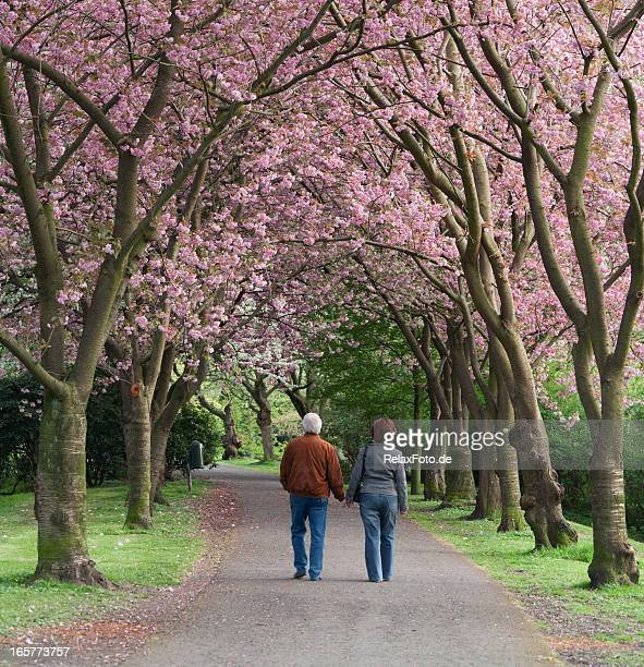 Rear view on senior couple walking under blooming cherry trees