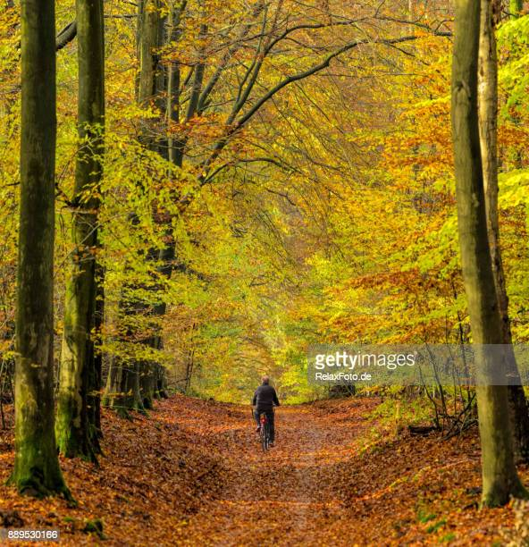 rear view on senior man cycling through autumn colored beech forest - gelderland stock pictures, royalty-free photos & images