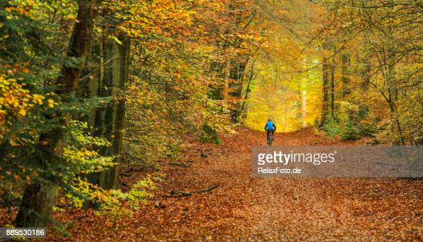 rear view on senior man cycling with mountain bike through autumn colored beech forest - gelderland stock pictures, royalty-free photos & images