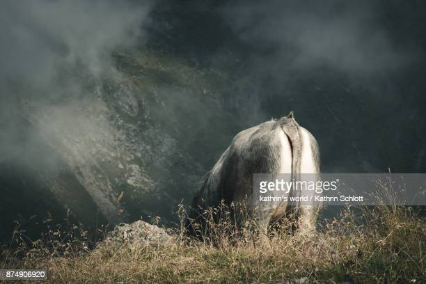 rear view - grazing stock pictures, royalty-free photos & images