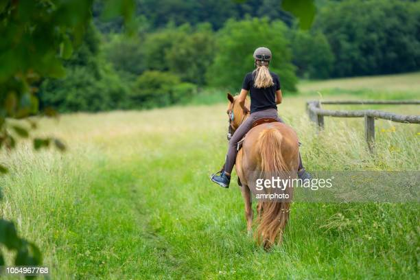 rear view woman riding horse on meadow - horseback riding stock pictures, royalty-free photos & images