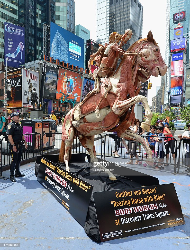 'Rearing Horse With Rider', one of Dr. Gunther von Hagens most recognized anatomical specimens, during the public unveiling at Times Square on July 24, 2013 in New York City. This work will then be included as part of the 'Body Worlds: Pulse' exibit from July 25th onward at Discovery Times Square. 'Body Worlds' is an international anatomical art and science exibition that displays preserved human bodies through a process called Plastination, which reveals inner anatomical structures.